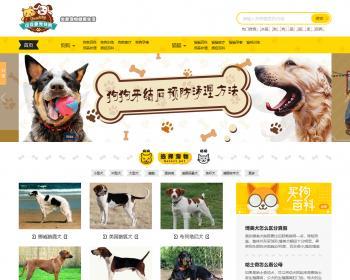 帝国cms仿《小可爱宠物网》宠物模板,宠物源码带手机同步插件